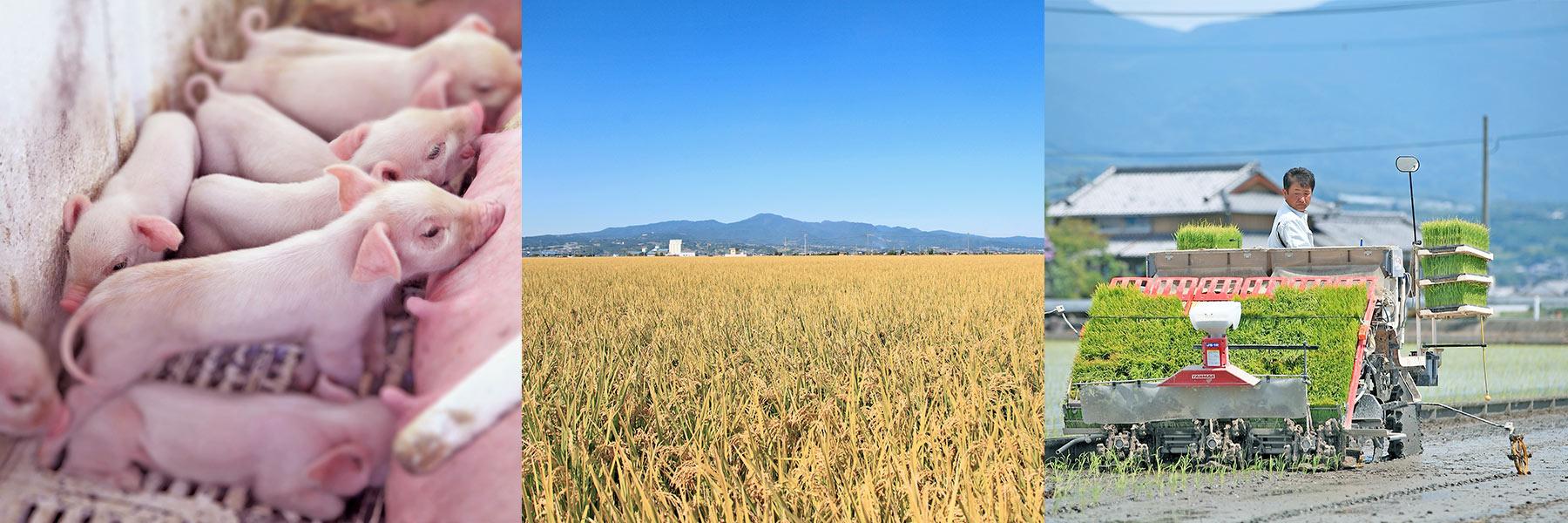 agriculture_bnr